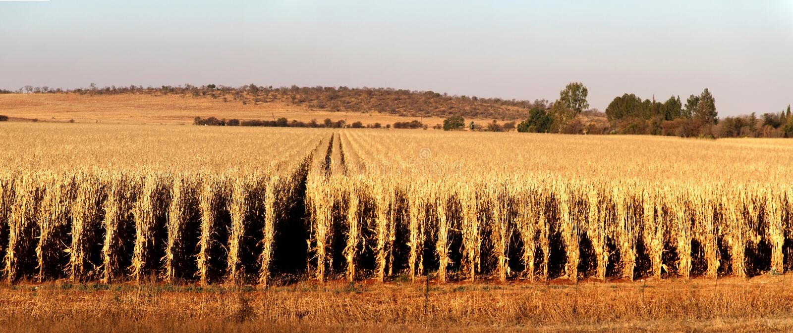 Farm in Potchefstroom, South Africa royalty free stock image