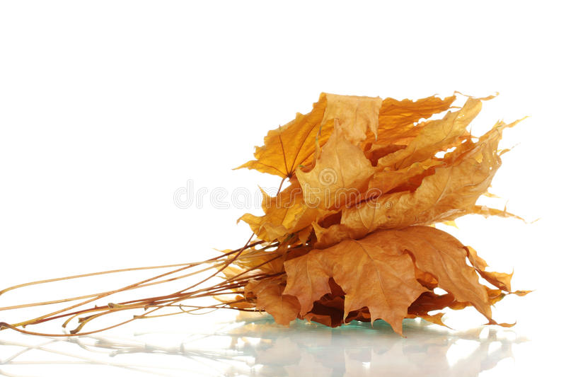 Download Dry maple autumn leaves stock photo. Image of fall, golden - 23760082