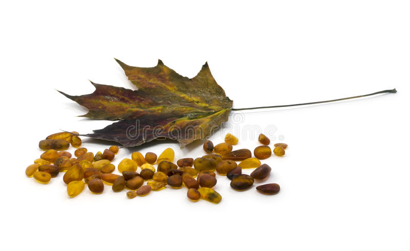Dry maple leaf and pieces of amber royalty free stock image
