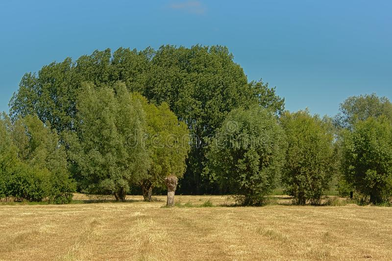 Dry mawn meadow with trees under a clear blue sky in Kalkense Meersen nature reserve, Flanders, Belgium. Dry mawn meadow with trees under a clear blue sky on a stock photo