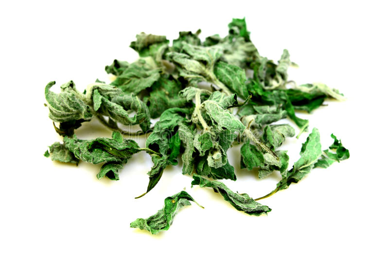 Dry mint. For tea and food stock images