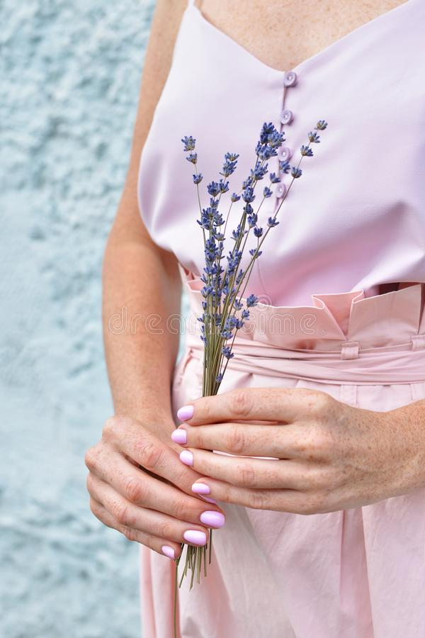 Dry natural lavender flowers in female hands against pink dress background stock photos
