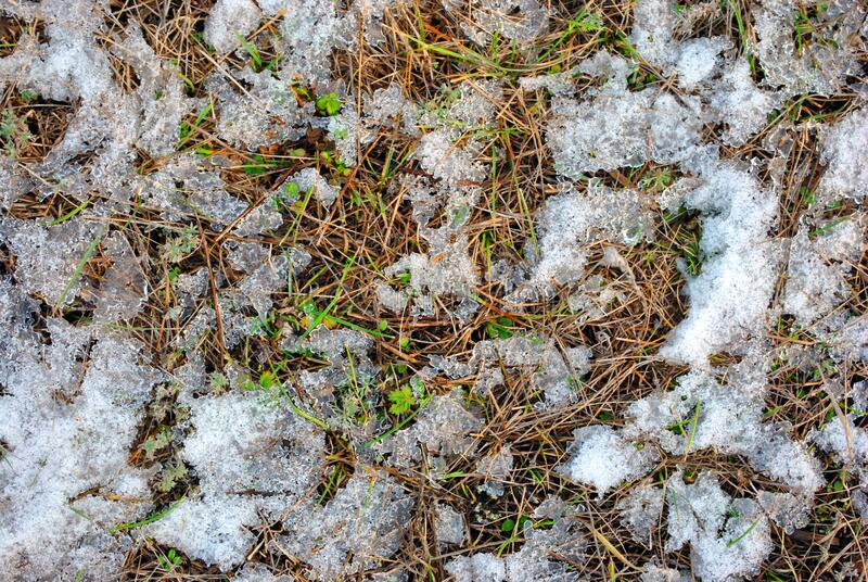 Dry old grass and first green spring sprouts covered with white snow, natural background. Top view royalty free stock photo