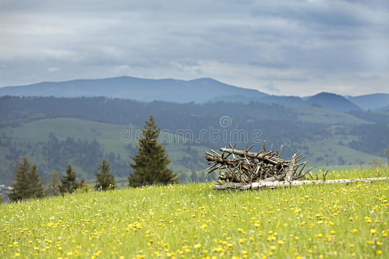 Dry old tree trunks stacked on green grass stock image