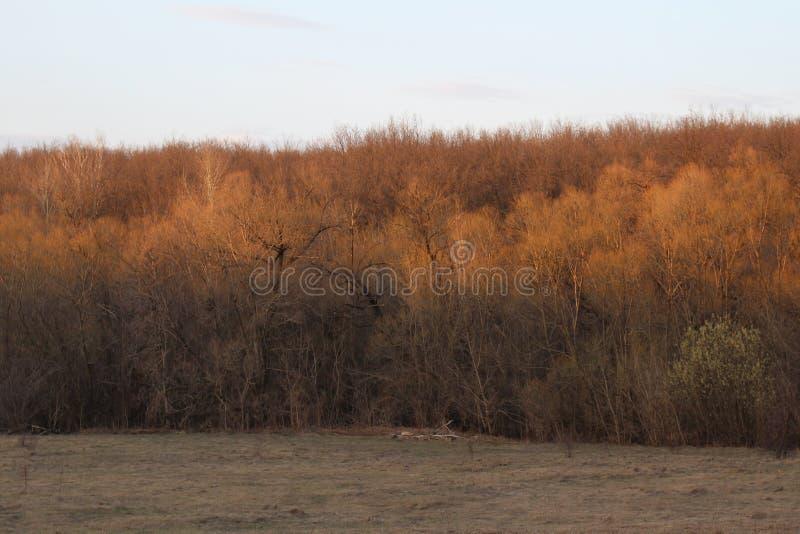 Dry orange forest stock photos
