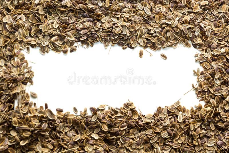 Dry organic dill seeds, space for text royalty free stock photography
