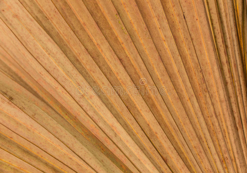 Dry Palm leaves lines and textures stock images