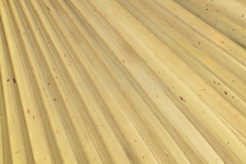 Download Dry palm leaves texture stock photo. Image of up, nature - 30730450