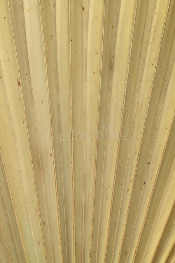 Dry Palm Leaves Texture Royalty Free Stock Photos