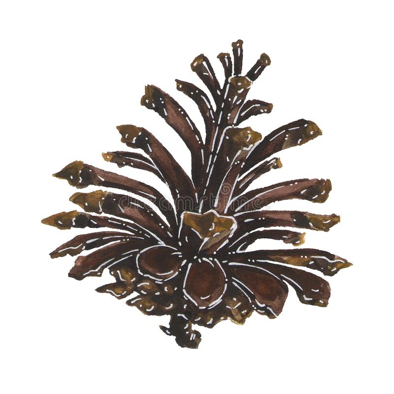 Dry pine cone isolated watercolor illustration royalty free illustration