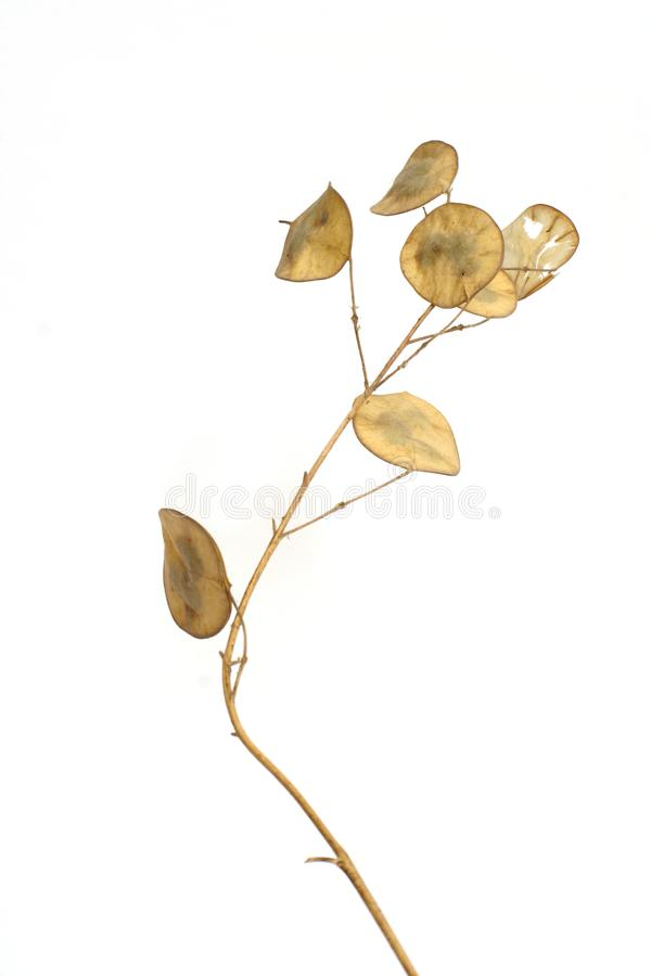 Dry plant stock images