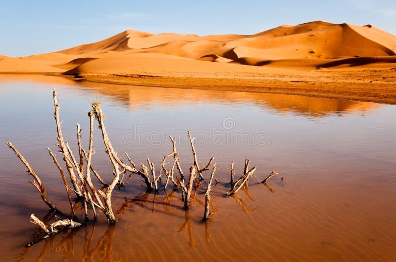 Dry plant in desert lake. Erg Chebbi, Maroc royalty free stock photography