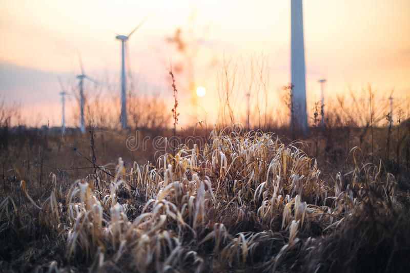 Dry plant in a field at sunset royalty free stock photos