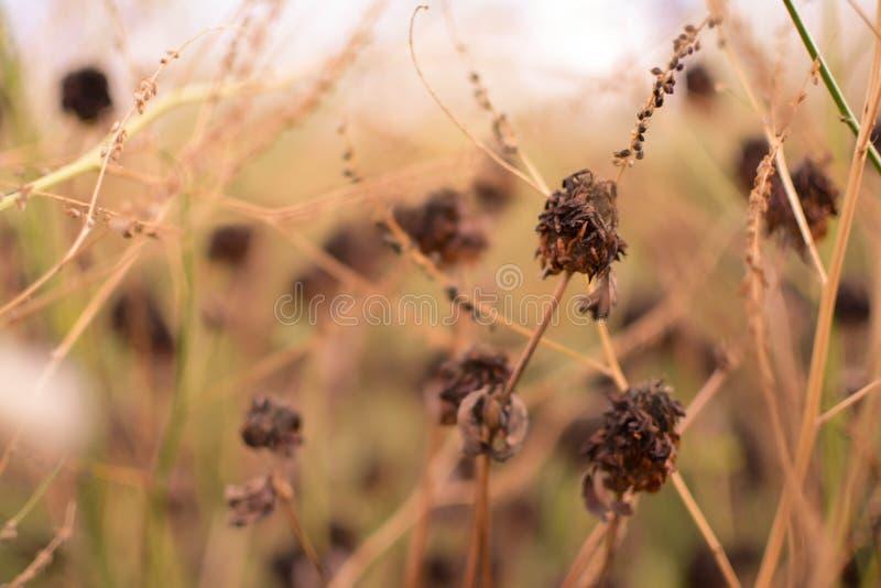 Dry plants on bush stock photography