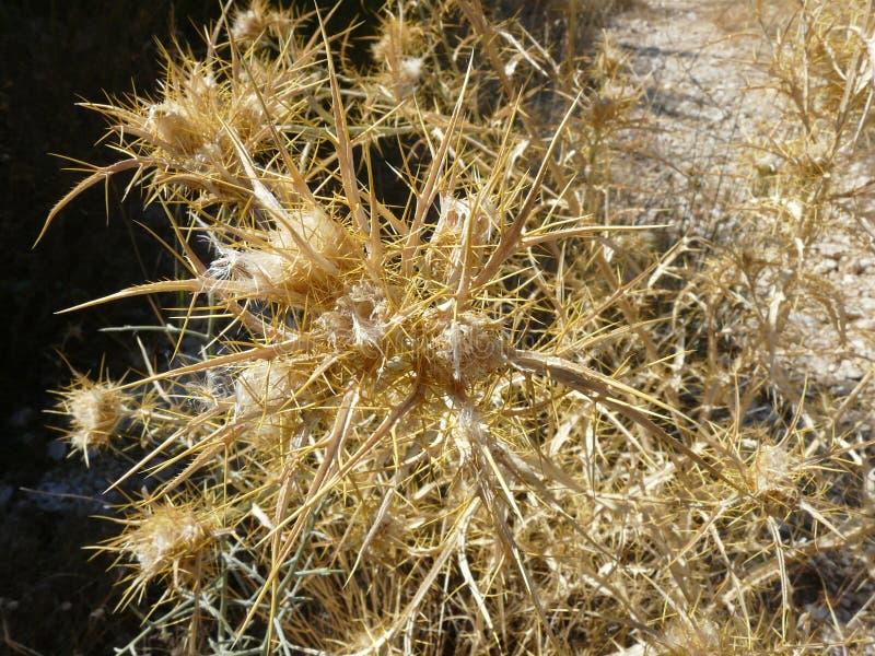 Dry plants stock photography