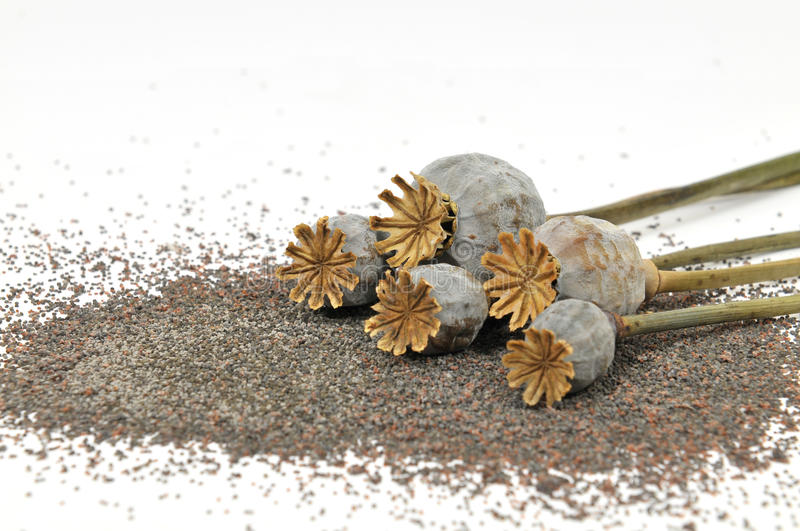 Dry poppy heads. With seeds stock photos