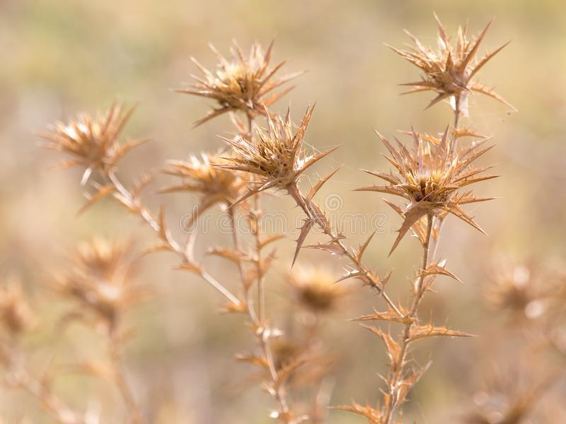 Dry prickly grass outdoors royalty free stock photos