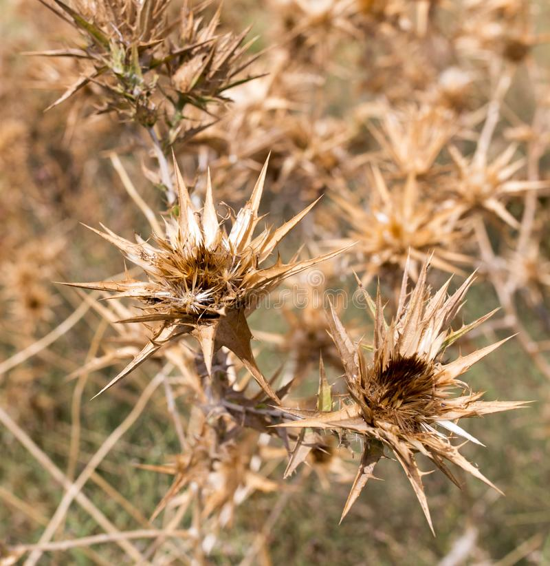 Dry prickly grass outdoors stock photos