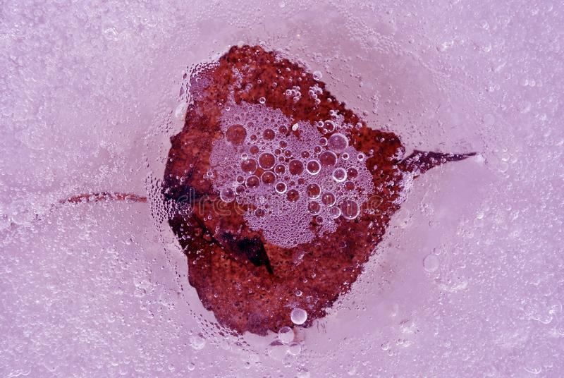 Dry red birch leaf frozen in ice surface with bubbles, top view close up. Detail stock photography