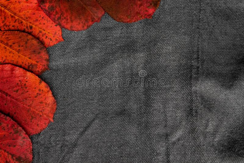 Dry red leaves lie on a gray fabric background royalty free stock photography