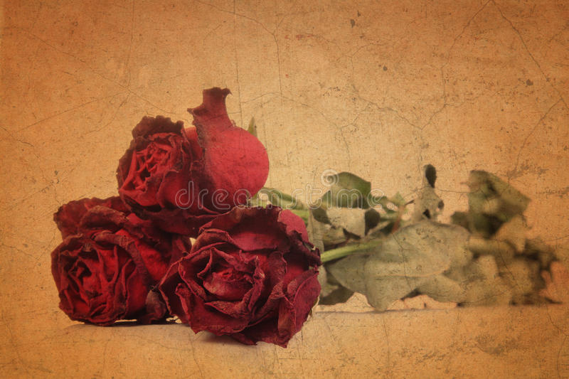 Dry red rose on old brown grunge paper. Background royalty free illustration