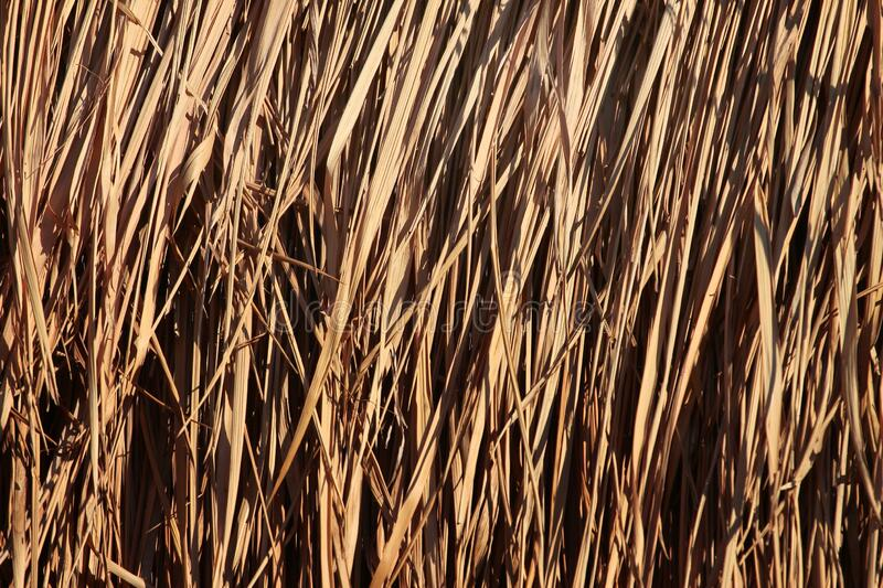 Dry reed leaves as background stock images