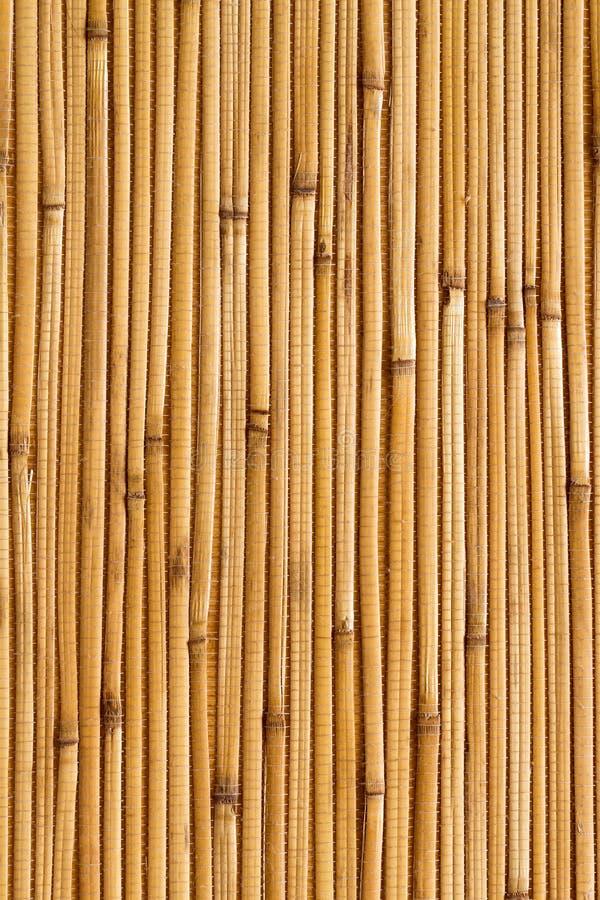 Dry reeds texture wallpaper stock photo