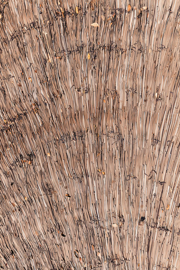 Dry reeds thatch texture background. Straw pattern. Dry reeds thatch texture background. Tidy straw pattern stock photos