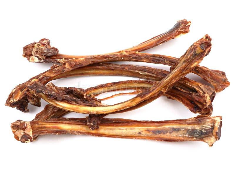 Download Dry rib stock photo. Image of canine, chew, bone, breath - 22657878