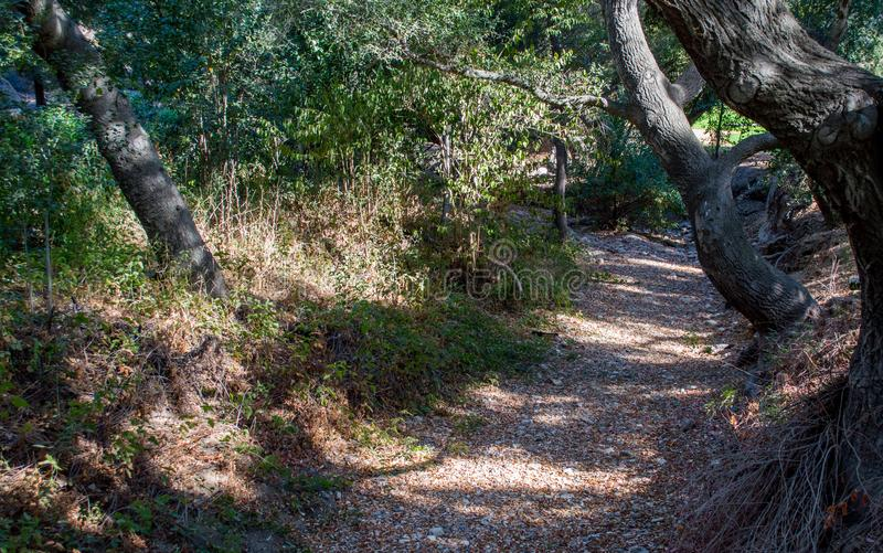 Dry riverbed path through a lush forest stock images