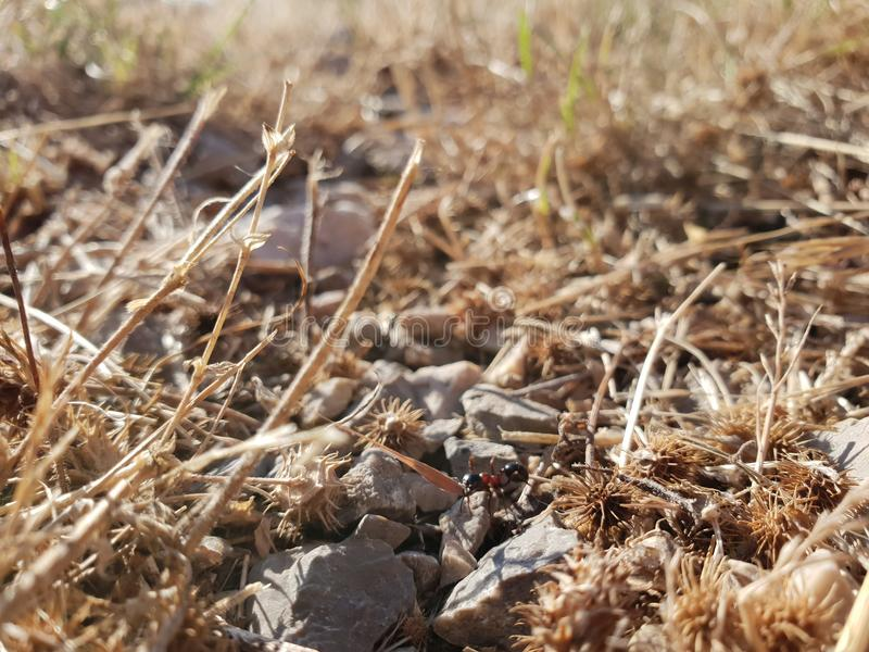 Dry rocky ground with ant stock photo