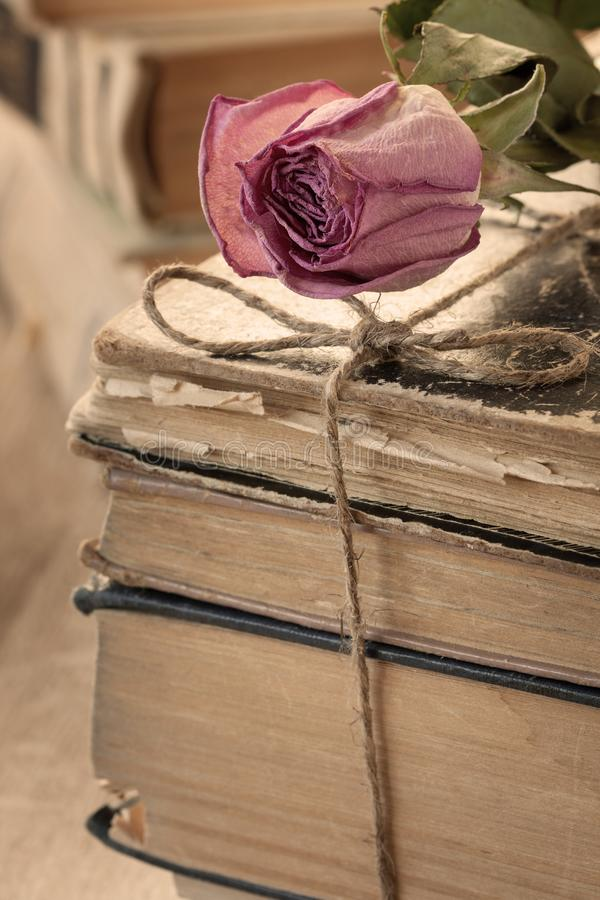 Dry rose and books. Dry rose on a pile of old books close-up stock photo