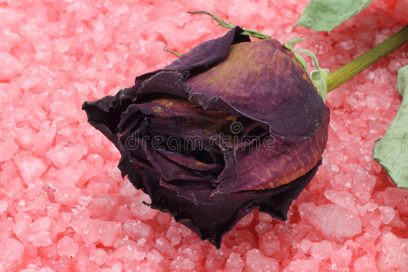 Download Dry rose on a sea salt stock image. Image of gardening - 21777237
