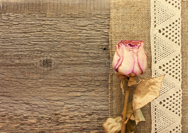 Dry rose on the wooden background stock images