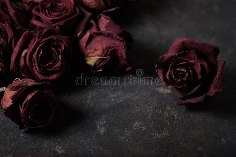 Beautiful dry roses stock photo