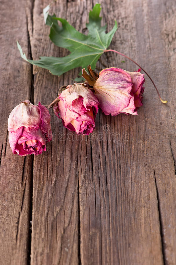 Download Dry Roses And Maple Leaf On Old Wooden Background Royalty Free Stock Images - Image: 23327559