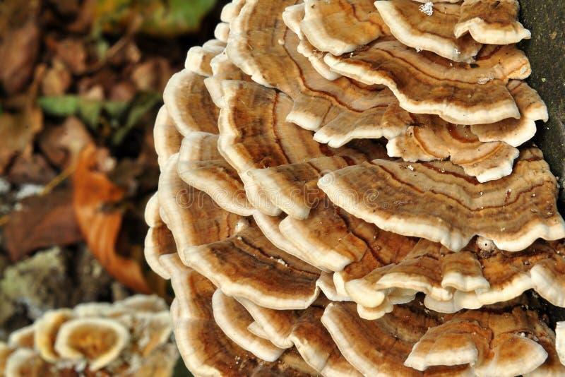 Download Dry rot fungus stock photo. Image of mushroom, tree, injury - 16172850