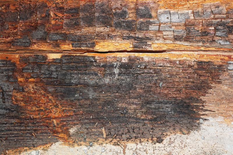 Dry rot on old wood beam stock photos