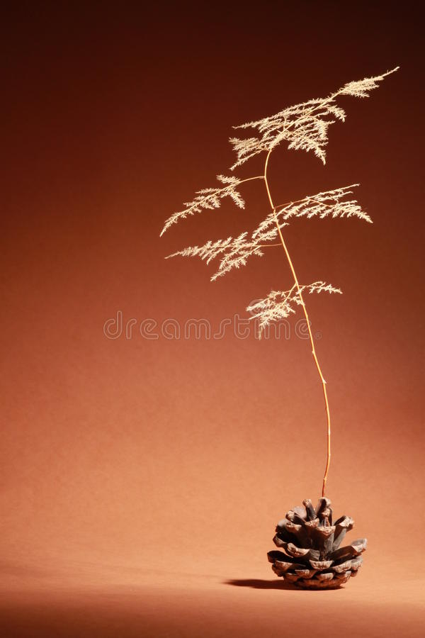 Download Dry rot Pinecone and leaf stock photo. Image of kraurosis - 26300612