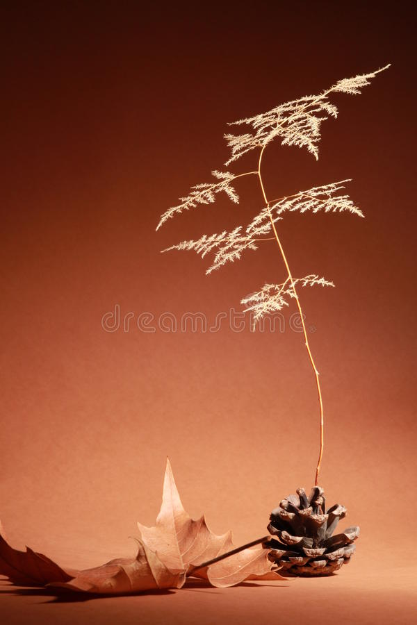 Download Dry rot Pinecone and leaf stock image. Image of foliage - 26300643