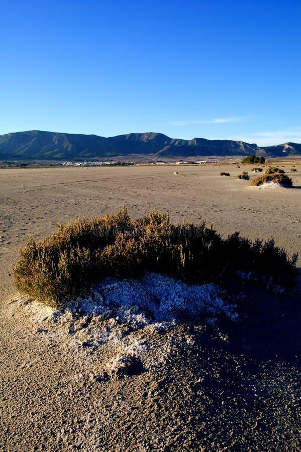 Dry salt lake - bush with salt detail. Dry salt lake, climate change: global warming - Rural landscape, bush with salt detail - Laguna de Salinas (Spain royalty free stock images