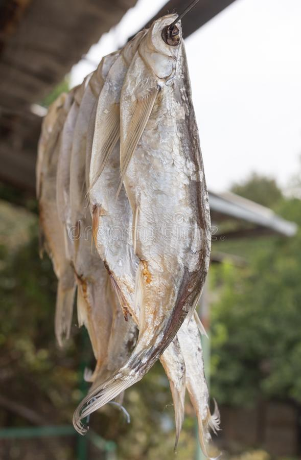 Dry salted fish outdoors royalty free stock image