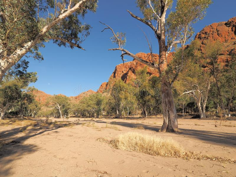Dry sandy river bed of Trephina river near Trephina Gorge. East MacDonnell ranges near Alice Springs, Northern Territory, Australia 2017 stock image