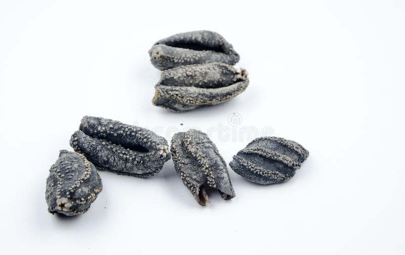 Dry sea cucumber royalty free stock images