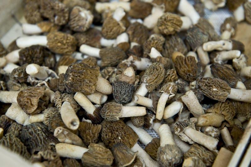 Download Dry Shiitake Mushrooms Stock Image - Image: 25039731