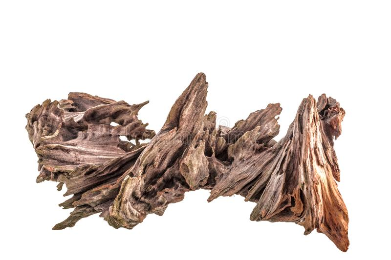 Dry snag of a coniferous tree, old weathered relief wood isolated on a white background. Close-up nature abstract stock photography