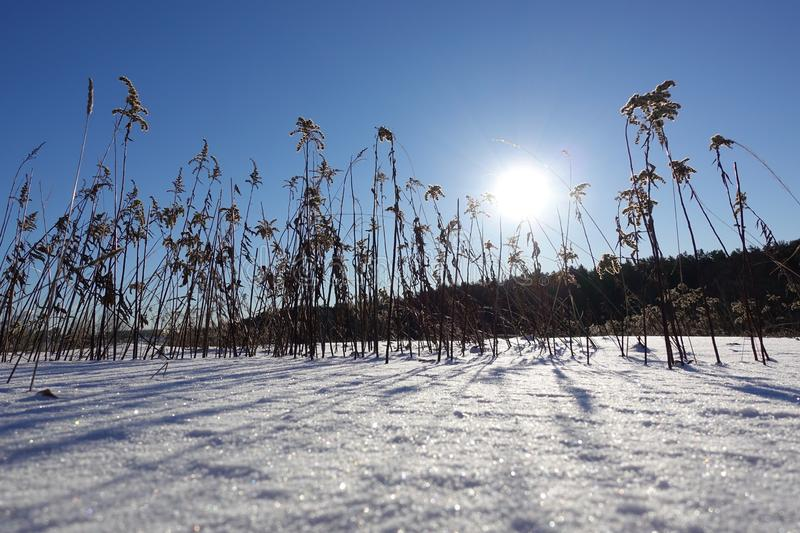 Dry snow-covered grass lit by the bright sun, snow caps on blades of grass, bright winter sun, shiny snow and snowdrifts.  royalty free stock photos