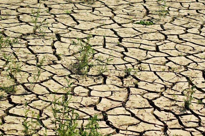 Download Dry soil stock image. Image of closeup, barren, earth - 13493393
