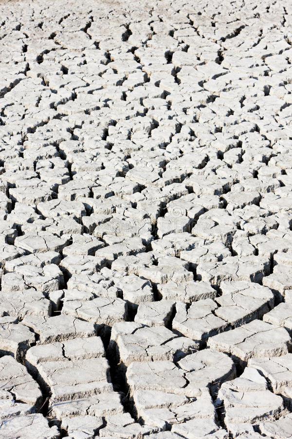 Download Dry soil stock photo. Image of parc, camargue, outside - 24227400