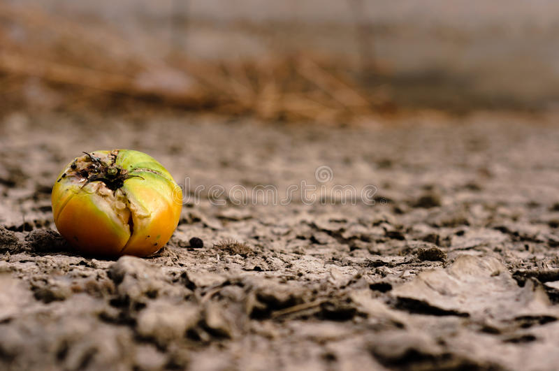 Dry Soil Closeup Stock Images